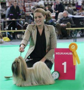 Showhond van het Jaar 2015 (teef) Susi Li Hsing Le Belle Bruelles